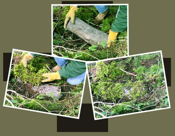 Selecting Your Time Capsule: Camouflaging the hollow log that also conceals its time capsule inside.