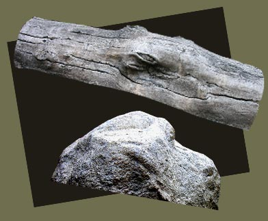 Geocapsule-Log-and-Rock