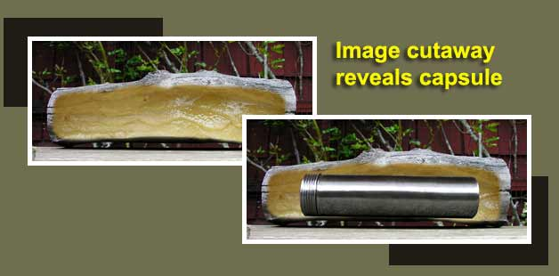 Selecting Your Time Capsule: Hollow log cutaway shows a hidden time capsule.